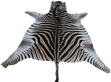 Genuine Zebra Rug - Trophy Grade - Darker