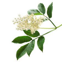 Elderflower Natural Flavour 30ml