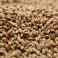 Malting Co. of Ireland Ale Malt, 1 pound