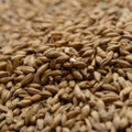 Briess Certified Organic Brewers Malt, 1 pound