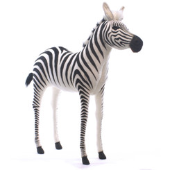 Zebra Young