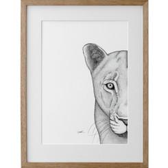 Linda the Lioness