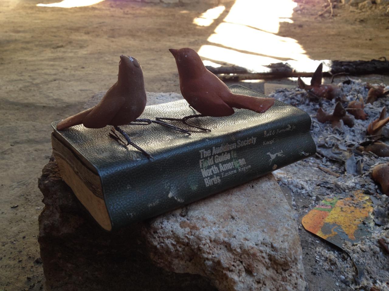 morales-birds-audobon.jpg