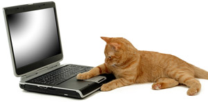 cat-laptop-300x148.jpg