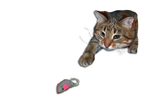 cat-mouse-toy-295.jpg