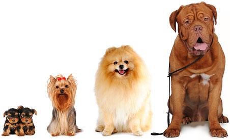 dog-group-452x275.jpg