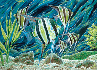 Angel Fish School