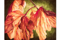 Backlit Autumn Leaves (Download)