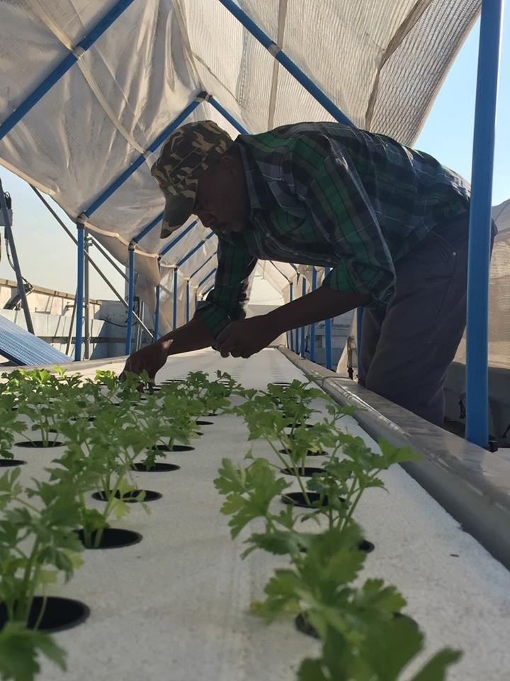 Aquaponics System With Best View In Africa Myaquaponics