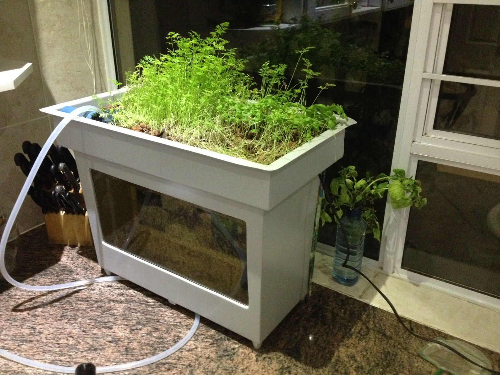 Desktop mini aquaponics system starting to show for Aquaponics fish for sale