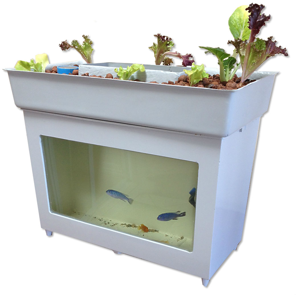 Desktop Mini Aquaponics System Starting To Show