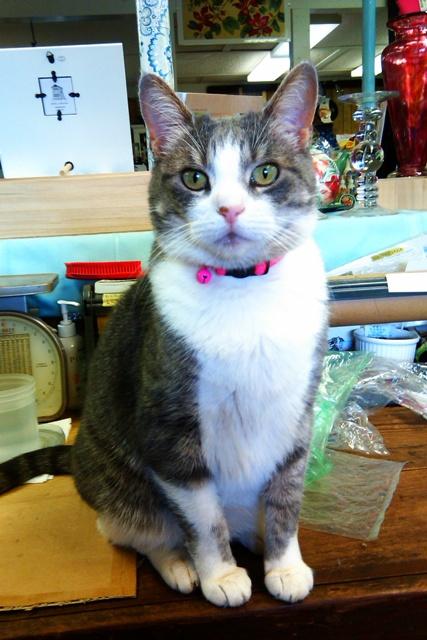 store-cat-2.jpg