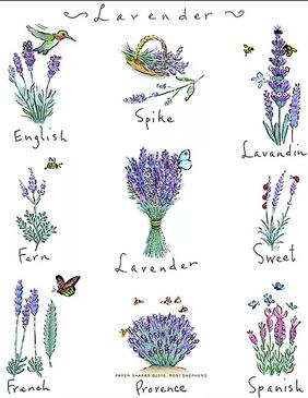 flour sack towel, friendship, flowers, floral, lavender