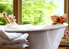 cat in bubble bath | mother's day card