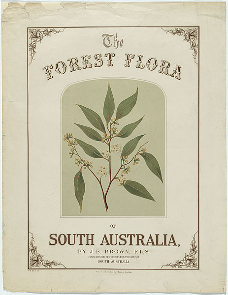 Forest Flora of South Australia