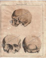 Medical Anatomy Medicine Phrenology Human Skull Antique Print
