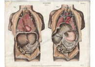 """""""Anatomy-Viscera"""" Antique copper-plate engraving by Thomas Milton, Published London 1814"""