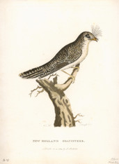 New Holland was still stillthe official name for the newly settled colony of New South Wales when this ornithologicl skin hit the shores of Great Britain. Governor Arthur Phillip  instructed all manner of artifact and exmaple of Natural History accompany  his reports from thenew Antipodean Colony