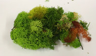 Small Bag of Lichen Moss Assorted Colours 20g