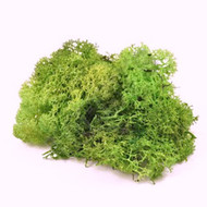 Medium Bag of Lichen Moss Medium Green 40g