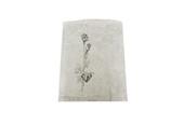 Giftbags-8-1/2X11 Silv 1000/Bx, Item No. 61.181