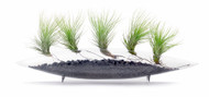 Miami Glass Pod Air-plants: Black
