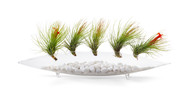 Miami Glass Pod Air-plants: White