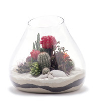 Handblown Glass Medium Terrarium