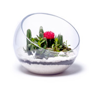 Half Moon Large White Terrarium