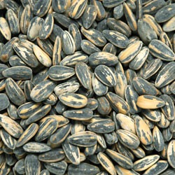 Linn's Roasted & Salted Sunflower Seeds 8 oz.