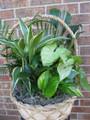 "Fresh 12"" Dish Garden Plant Basket"