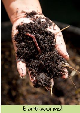 dte-earthworms.jpg