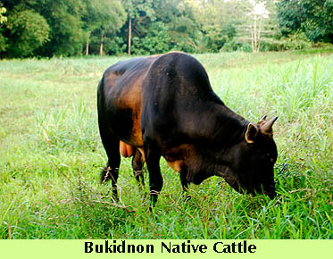 dte-nativecowpasture2.jpg