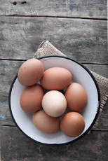 Backyard Eggs (BlackGold Label)