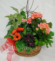 Medium size basket