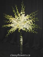denrobium orchids tree. classy flowers