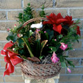 Christmas Garden  Tropical Planter