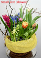 Spring Flowering Bulbs Dish Garden