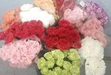 Premium Carnations