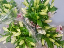 Asiatic Lilies Special