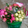 30 Peonies Assorted Colour