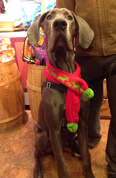 2013-nov-frank-in-scarf-at-beowoof-400x610.jpg