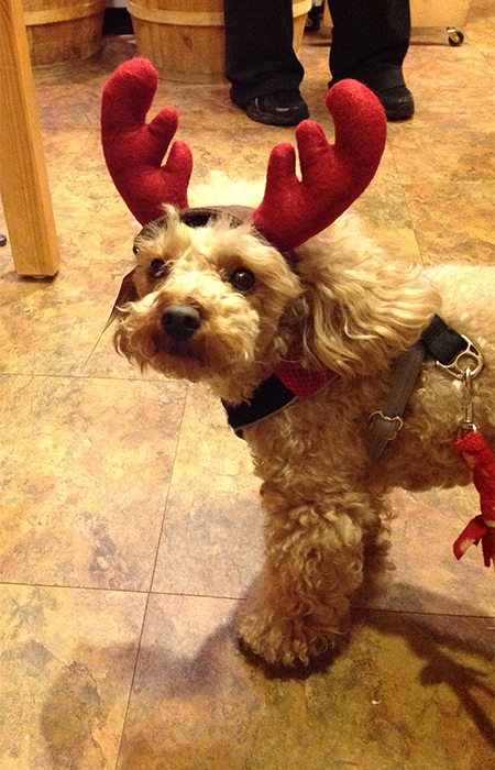 2013-teddy-the-beowoof-reindeer-450x700px.jpg
