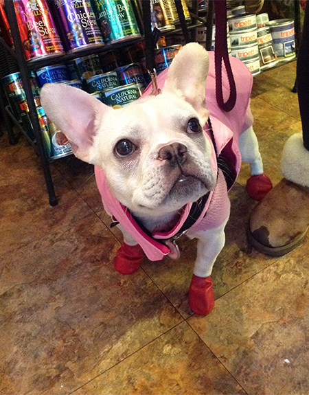 2014-january-charlotte-at-beowoof-450x575.jpg