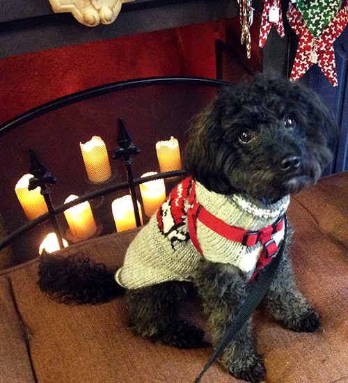 2014-january-logan-at-beowoof-fireplace-500x550.jpg