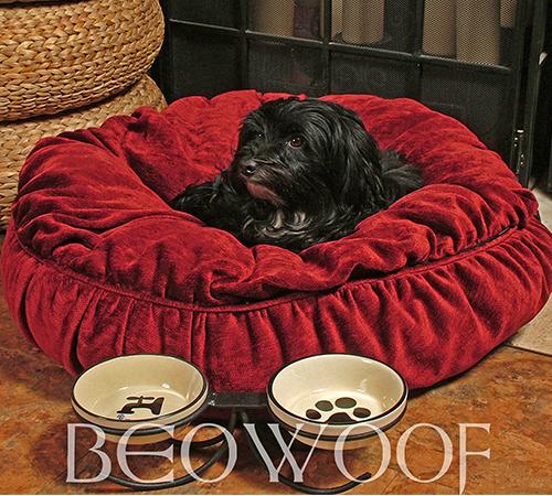 beowoof-lola-500x450.jpg