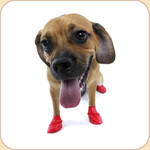 PAWZ  Disposable Dog Colorful Boots x12
