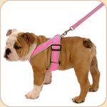 Precision Sport Harness in Nylon--Pink