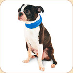 Cooling Nylon Collar--Blue