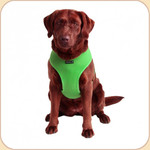Puppia Mesh Harness in Bright Green